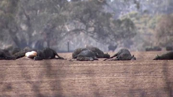 Entire Species Could Have Been Destroyed By The Australian Bushfires