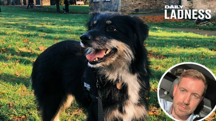 Cyclist Rescues Stranger's Dog After Hour-Long Chase Around Central London