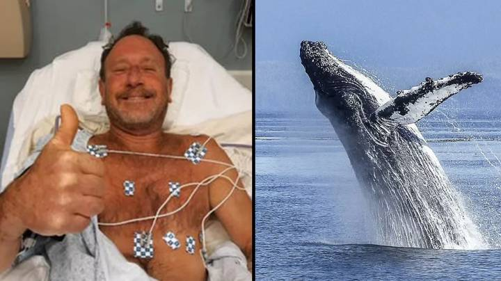 Man Swallowed By Humpback Whale Describes Being Inside Beast