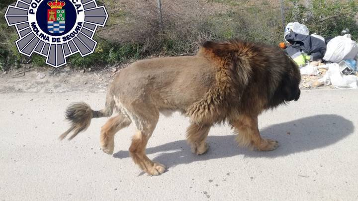 Police Called To Reports Of A Loose Lion Which Turns Out To Be A Dog