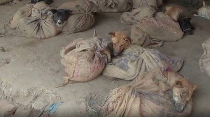 PETA Video Shows Dogs Tied In Sacks And Charred Monkey Hands At Indian Wet Market