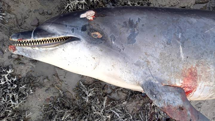'Friendly' Dolphin That Played With People Dies After Being Hit By Boat