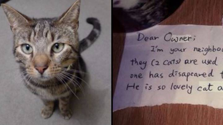 Man Upset Over Cat's Death Gets Note From Neighbour Who Loved Him Too