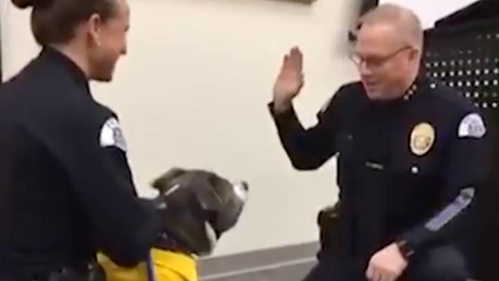 Terminally Ill Dog Sworn Into Police Force As Honorary K-9 Officer