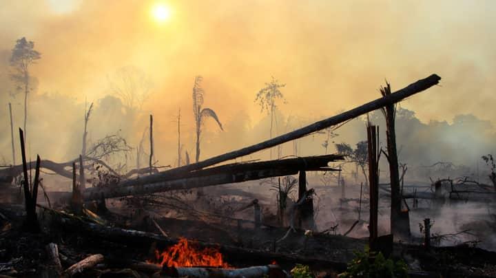 Amazon Rainforest Suffers Worst Start To Fire Season In 10 Years