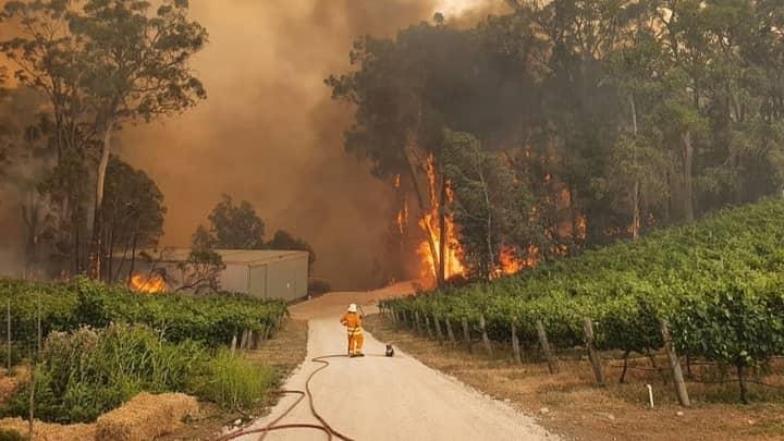 Heartbreaking Image Shows Firefighter Standing With Koala At South Australian Bushfire