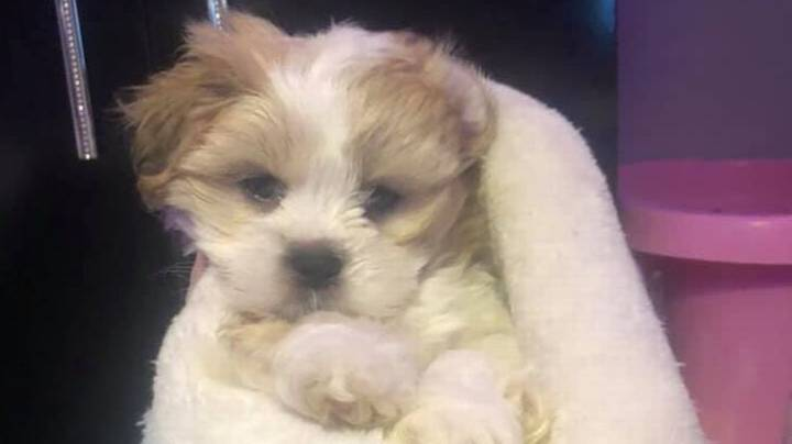 Teen Says Stranger Found Her Missing Pup And Refuses To Give It Back