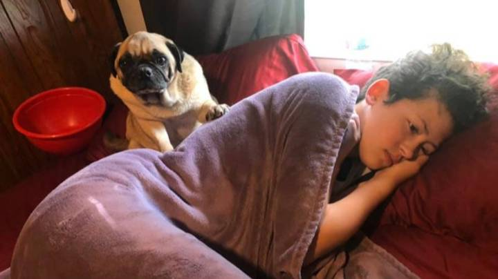 Woman Says Pug Does 'Angry Poos' On Her Favourite Things When He Feels Wronged