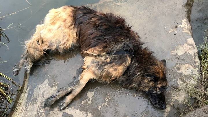 Woman Avoids Jail After Pleading Guilty To Trying To Drown Dog With Rock