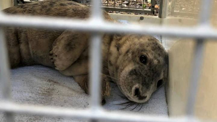 Injured Seal Pup Dies After People Scare It Back Into The Sea To Take Photos With It