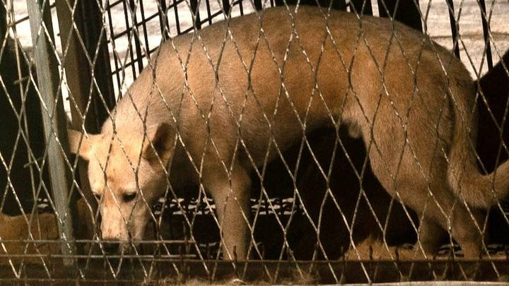 'Auction House Of Horrors' Discovered At South Korean Dog Farm
