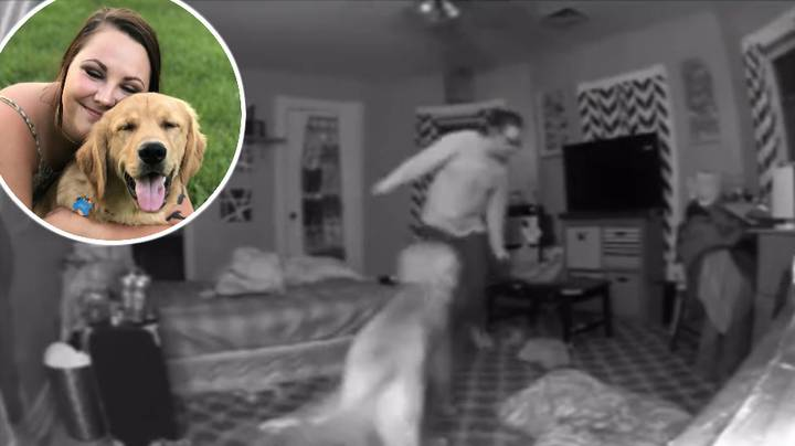 Dog Helps Owner Get To Bed After She Comes Home From Night Out
