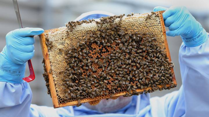 Two Boys Could Face 10 Years Behind Bars For Allegedly Killing Half A Million Bees