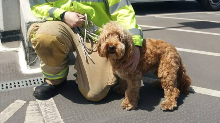 Firefighters Save Dog Trapped In Boiling Hot Car During Heatwave