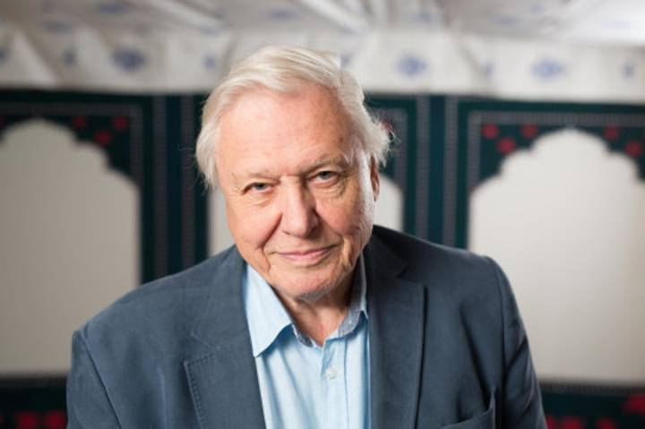 David Attenborough: A National Treasure And Your Granddad All Rolled Into One