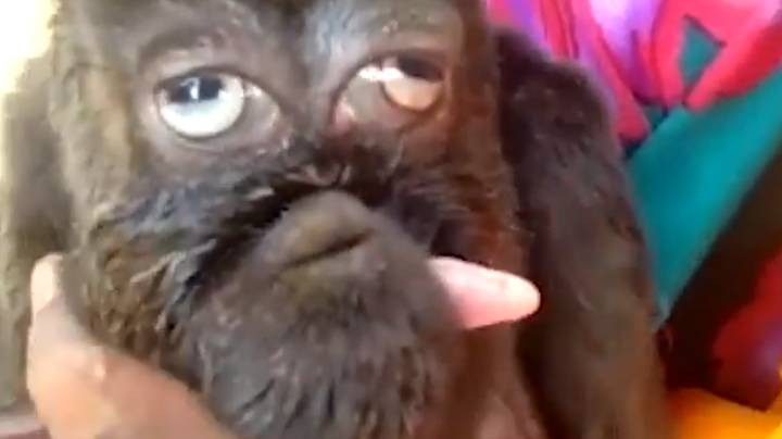 Footage Emerges Of Mutant Goat With Human-Like Face