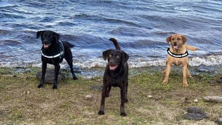 Owner Left Devastated As His Dogs Die After Plunging Off Cliff