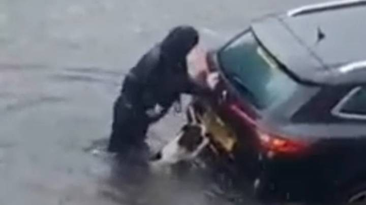 'Superhero' Dog Helps Push Car Stuck In Glasgow Floods To Safety