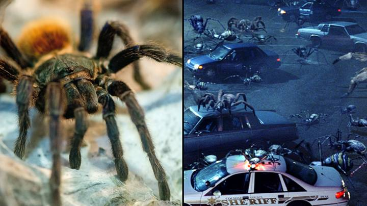 If Spiders Worked Together, They Could Eat All Humans In A Year