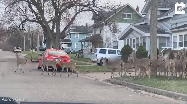 Herd Of Deer Roam Around Deserted Town During Coronavirus Lockdown