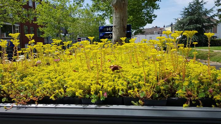 Dutch City Covers 316 Bus Shelters In Plants To Encourage Bees