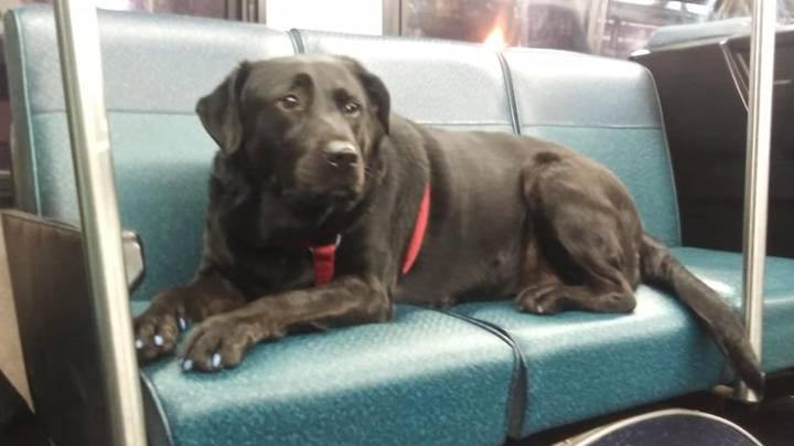 Dog Takes Itself On Bus Ride To Dog Park Every Day To Get Some Exercise
