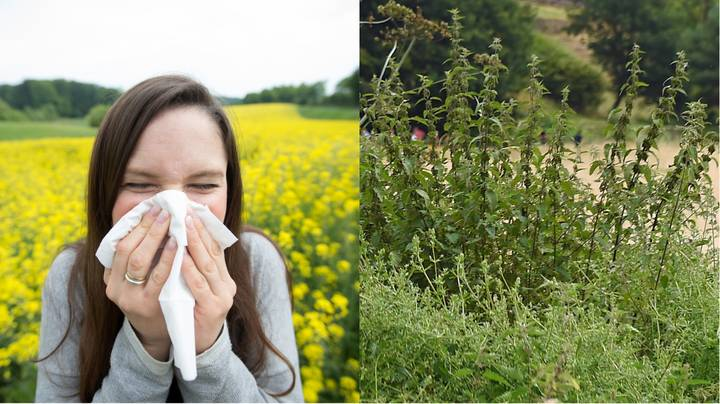 Bloke Reckons He's Cured His Hay Fever With Stinging Nettles