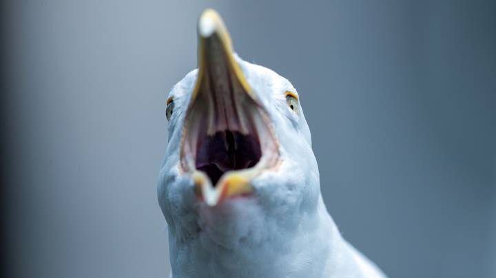 Study Shows That Seagulls Have Learned When School Break Times Are