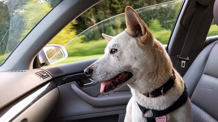 Nevada Makes It Illegal To Leave Dogs In Hot Cars