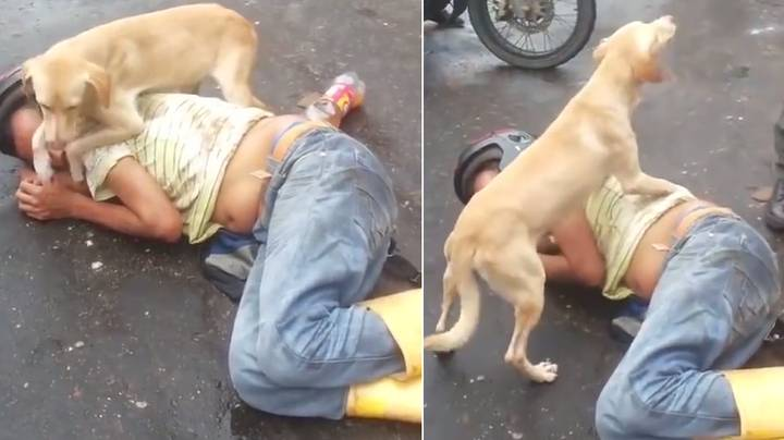 Loyal Dog Guards Drunk Owner As He Sleeps In The Middle Of A Road