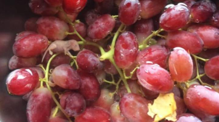 Shopper Finds 'Mouse Foetus' Inside Grapes Bought At Woolworths