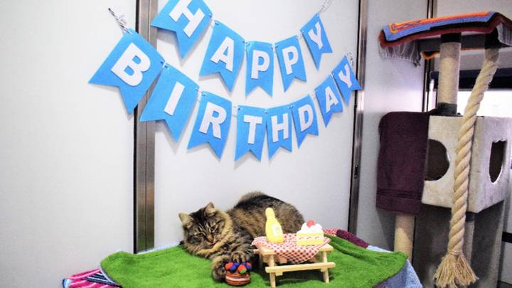 Cat Looking For Home After Nobody Turned Up To Her Birthday Party