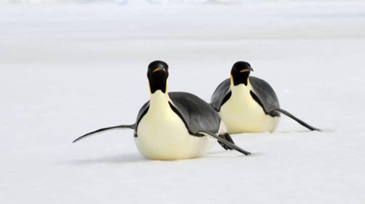 UK Government Backs Plan To Create 1.8m Kilometre Antarctic Nature Reserve