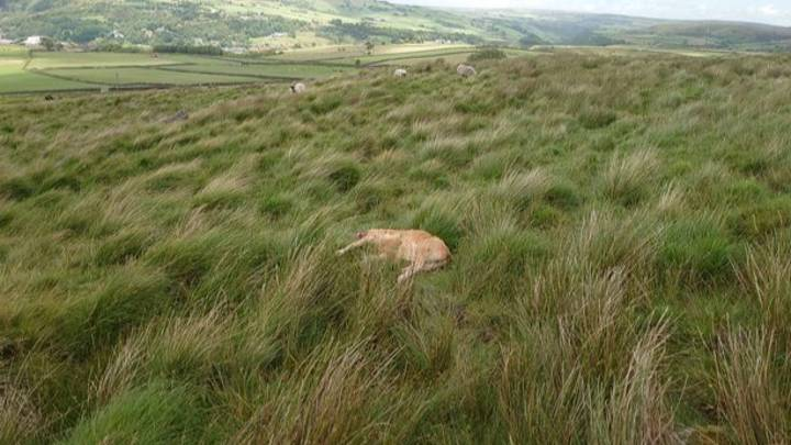 UFO Enthusiast Claims Calf Was Abducted And Killed By Aliens