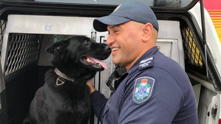 Beautiful Moment Police Dog Named Bravo Was Reunited With Owner After Going Missing