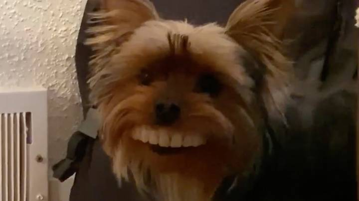 Dog Steals Owner's Fake Dentures And Looks Hilarious