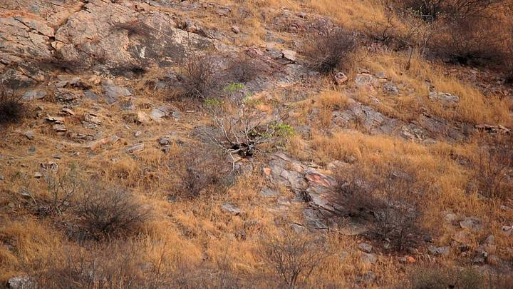 Photographer Captures Leopard Camouflaged On Hillside And People Struggle To Spot It