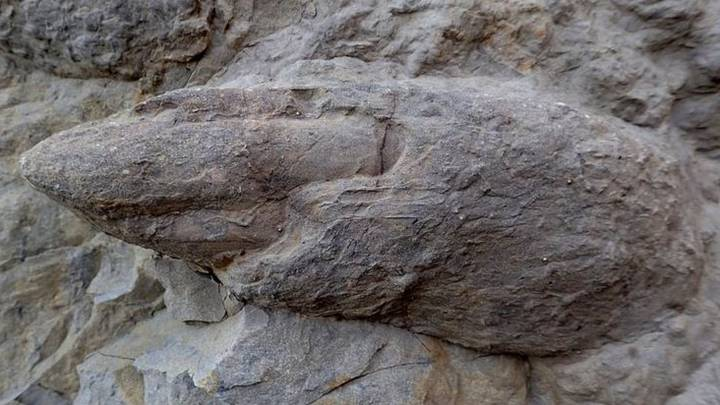 Well-Preserved Dinosaur Footprints From 100 Million Years Ago Discovered On England Beach