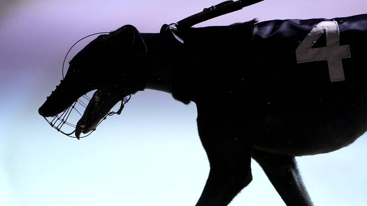 Trainer Disqualified After Winning Greyhound Tests Positive For Meth