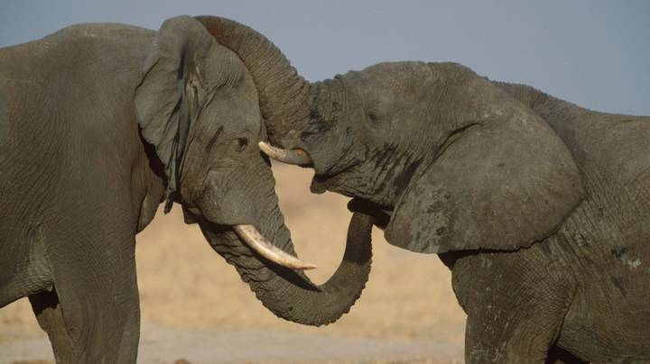 ​Ivory Banned In Hong Kong Following Historic Vote