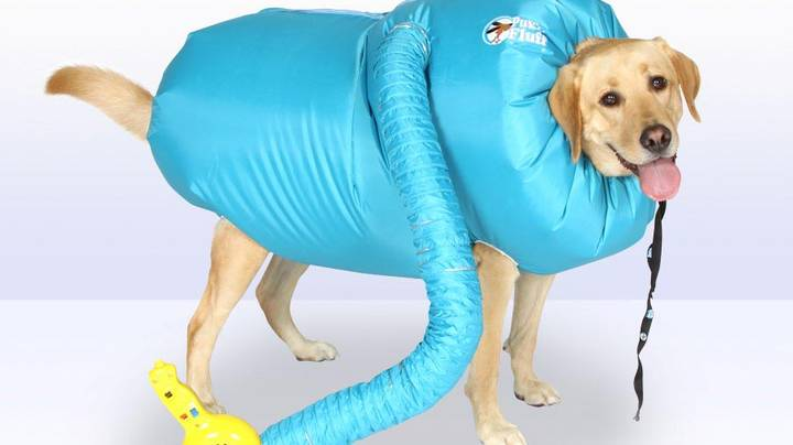 You Can Now Buy A Special Drying Coat For Your Dog