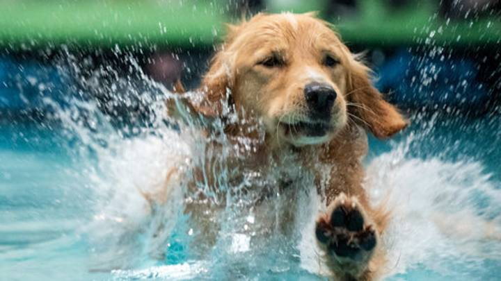 Climate Change Isn't Just A Human Problem, It's Affecting Our Pets Too