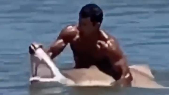 Swimmer Grabs Large Shark With Bare Hands And Holds Its Mouth