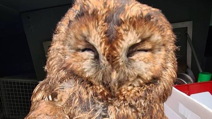 Owl Rescued After Two Days Trapped In Filthy Hotel Extractor Fan