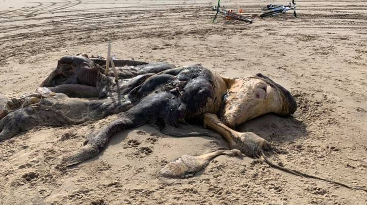 Man Finds Mysterious Stinking Furry Creature With Flippers Washed Up On Beach