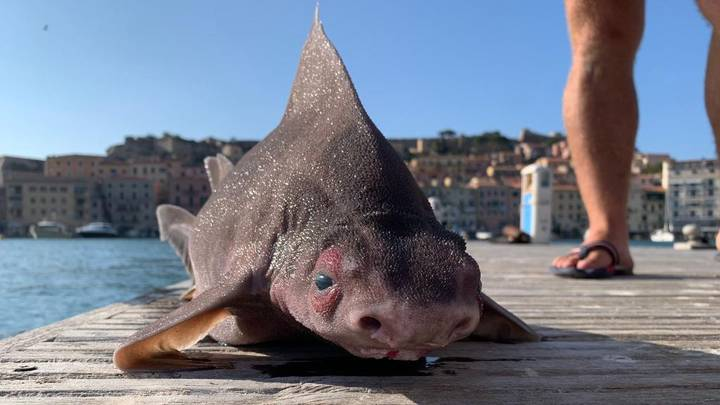 Sailors Find Fish With The Body Of A Shark And Face Of A Pig