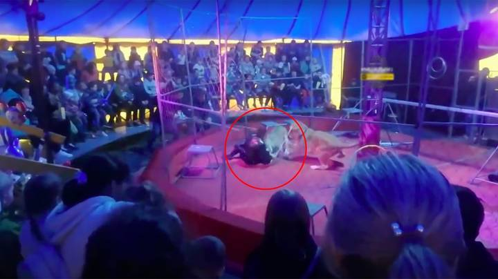 Circus Trainer Mauled By Lion In Front Of Children And Parents