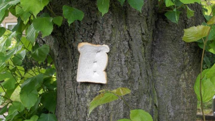 Someone Has Been Stapling Bits Of Bread To Trees In Sheffield