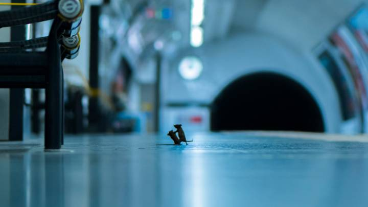 Picture Of Mice Fighting At London Underground Up For Wildlife Photo Of The Year