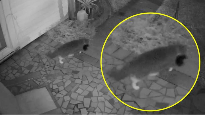 Woman Contacts Police Over 'Prowler' After Clothes Left On Porch, Turns Out To Be Her Cat